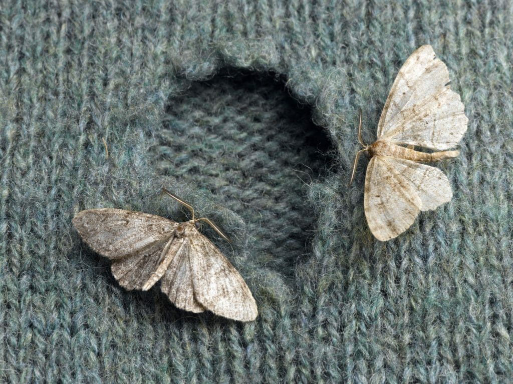 Bugs - moths are making tiny holes in clothes